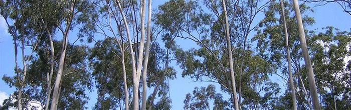 BCCA Native Forests