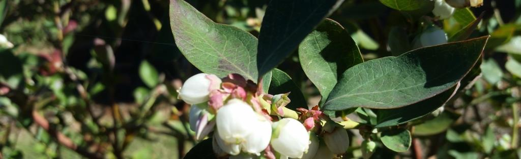 BCCA Horticulture